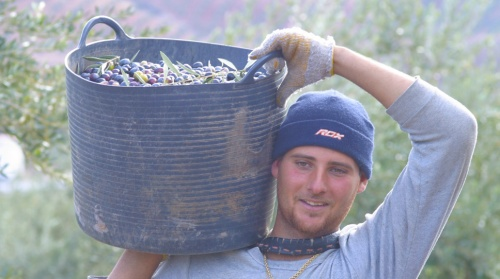 olive picker cropped 4 desktop